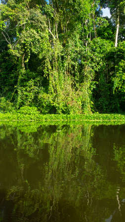 Trees on the edge of a river reflected in the water in the Ecuadorian Amazon near the city of Nueva Loja on a sunny day