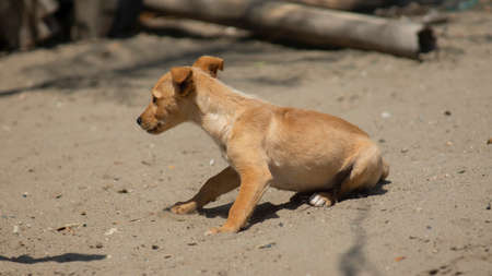 Little yellow and white puppy sitting alone on the beach sand