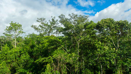Approach to the treetops of a forest in the Amazon on a cloudy day in Ecuadorian near the city of Nueva Loja - Ecuador