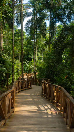 Elevated path built with wood crossing the forest in the Ecuadorian Amazon with tall trees on the sides and green vegetation background Stock Photo