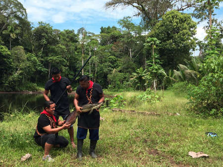 Nueva Loja, Sucumbios / Ecuador - September 2 2020: Three indigenous young people of Cofan nationality carrying with their hands a large fish just caught in the middle of the Amazon jungle