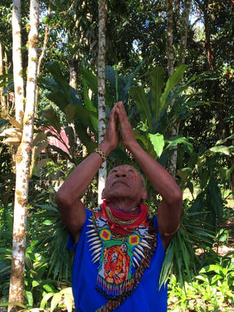 Nueva Loja, Sucumbios / Ecuador - September 2 2020: Elderly indigenous shaman of Cofan nationality performing a healing ritual with his arms raised in the Amazon jungle seen from the front