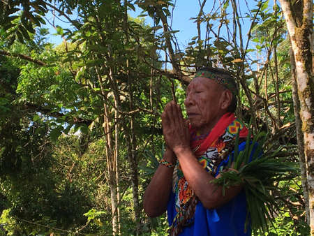 Nueva Loja, Sucumbios / Ecuador - September 2 2020: Elderly indigenous shaman of Cofan nationality praying with his hands joined and eyes closed in the Amazon rainforest Editorial