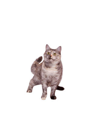 impish: Cat on the white background