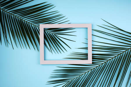 Top view of green tropical leaves and shadows on blue color background. Flat lay. Minimal summer concept with palm tree leaf. Creative copy space with paper frame. Stock Photo