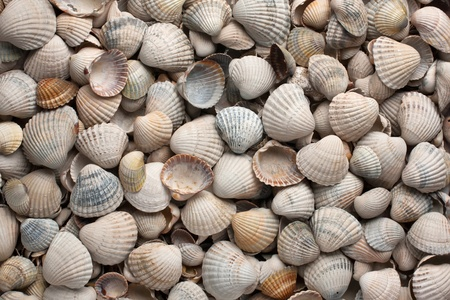 sea shells, background, can be used as a texture