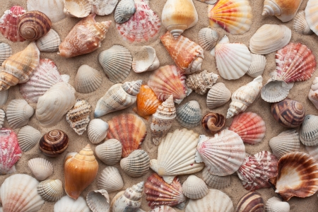 Sea shells on sand as background