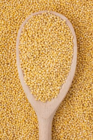 Wooden spoon with millet is on a bunch of millet, can be used as background Stock Photo - 16984146