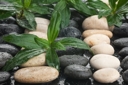 zen stones and leaves with water drops can be used as background Stock Photo - 17589941