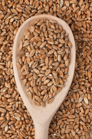 Wooden spoon with wheat lies on wheat Stock Photo - 17967587