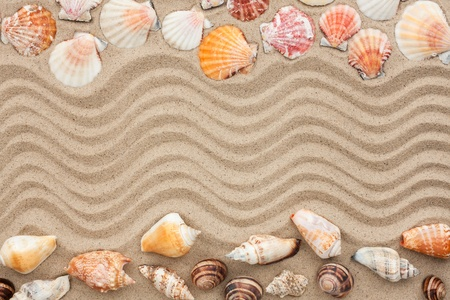 Sea shells with sand as background, concept photo