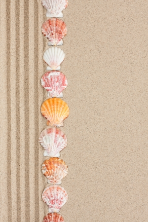 Stripe of seashells lying on the sand with space for text