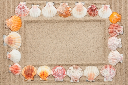 Frame of seashells on the sand photo