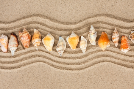 Seashells on the sand, can be used as background