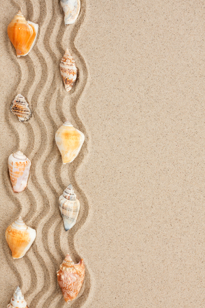 Stripe of seashells lying on the sand with space for text photo