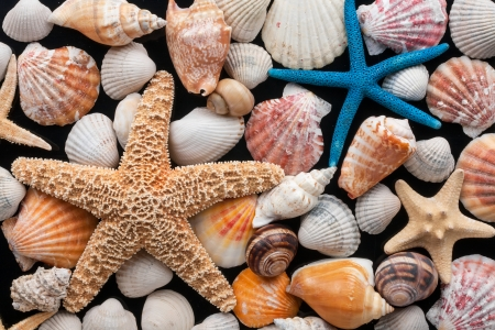 Starfish and shells on a black background photo
