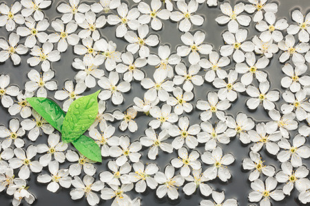 Cherry flowers and leaf in water, can be used as background photo