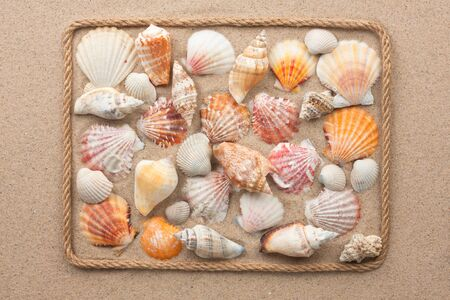 shell: Beautiful frame of rope and sea shells on the sand, as background