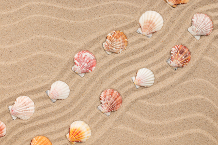 Seashells and a zigzag from the sand. View from above