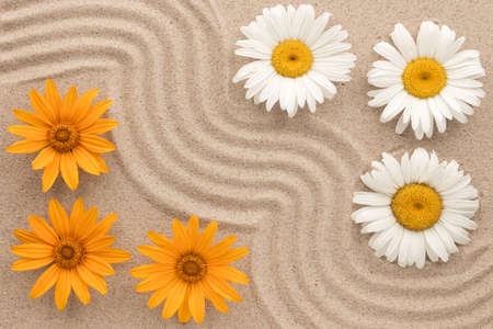 Beautiful zigzag of sand and flowers, chamomile grow on the sand. View from above