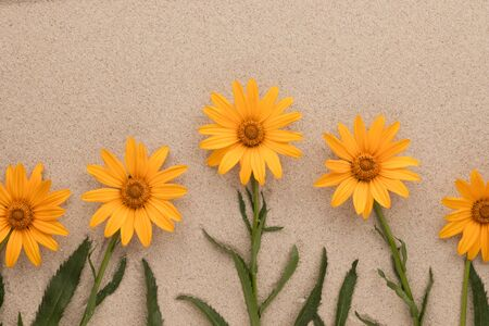 Conceptual image of yellow daisies growing from sand, Top view. Copy space 免版税图像