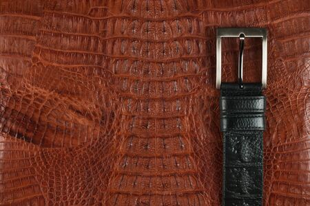 Close-up, black belt made of genuine leather made by hand lies on brown crocodile skin. Top view. Copy space Reklamní fotografie