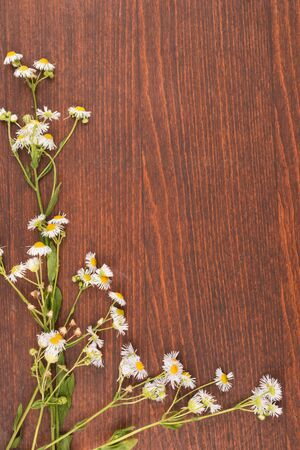 Wildflowers on a wooden background. View from above. Spring landscape with flowering flowers