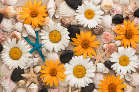 Beautiful background of daisies, seashells, starfishes and black stones on the sand. View from above