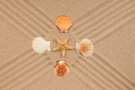 Yellow star and seashells lie in the center of the cross lines. Top view