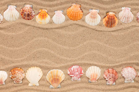 Two rows of seashells lying on the sand. Beautiful frame made of seashells with place for text. Top view