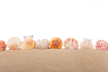 Seashells are sticking out of the sand. Isolated on white background. Beach background