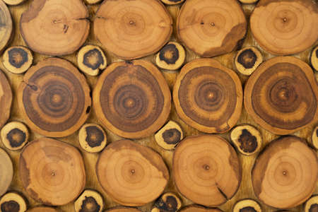 Wood panel made from cuts from a tree trunk. Top view Banco de Imagens