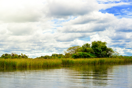 corrientes: Wetlands in Nature Reserve Esteros del Ibera National Park, Colonia Carlos Pellegrini, Corrientes, Argentina.