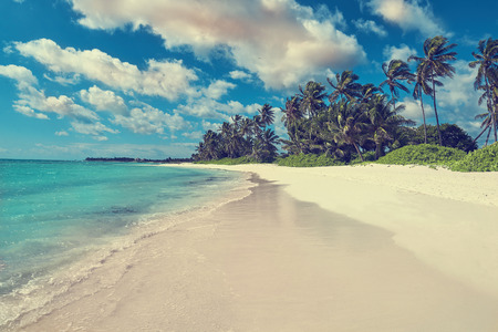 cana: Tropical white sandy beach with palm trees. Punta Cana, Dominican Republic