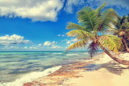 cana: Tropical white sandy beach with palm trees. Saona Island, Dominican Republic Stock Photo