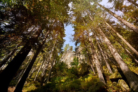mistic: Magic dark forest. Autumn forest scenery with rays of warm light. Mistic forest. Teplickie Rocks Sudety Mountains