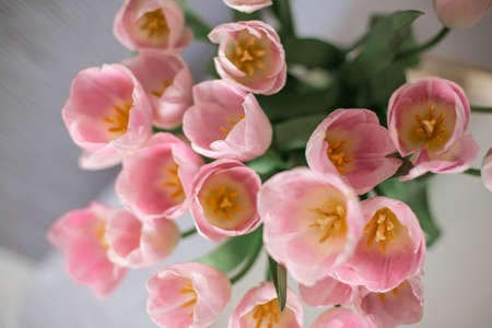 A bouquet of spring beautiful flowers in a glass vase. Fresh Pink tulips on white background.