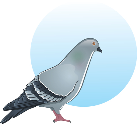 Cute vector pigeon illustration Vector