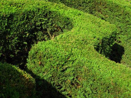 hedge Stock Photo - 18135921