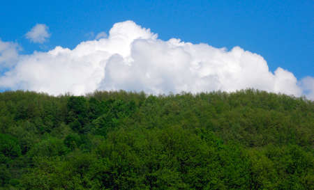 green forests and blue sky with clouds