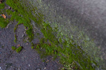corner of a brick wall with moss mold.