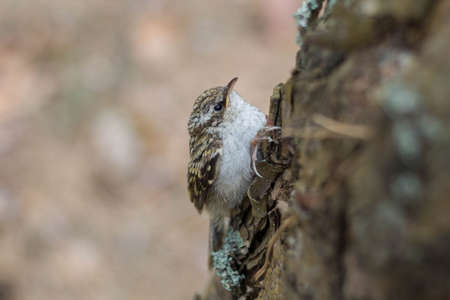 Little bird nestling on a tree close up 스톡 콘텐츠