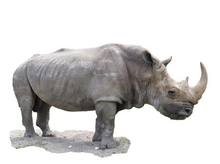 The big rhinoceros izolated in white background
