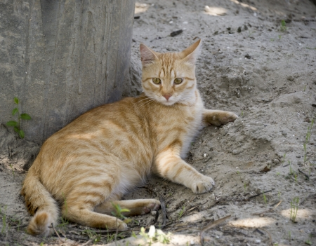 Ginger cat at the zoo