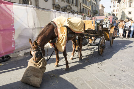 Florence, Italy- April 01, 2014:Tourists visiting the sights on the Piazza San Giovanni and del Duomo.Horse eating hay
