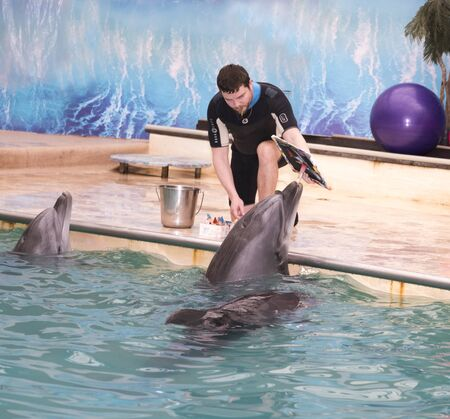 dolphinarium: Rostov-on-Don, Russia- February 1, 2015:  Dolphin - Mom draws a picture under coach at Rostov dolphinarium, dolphins - sons are waiting Editorial