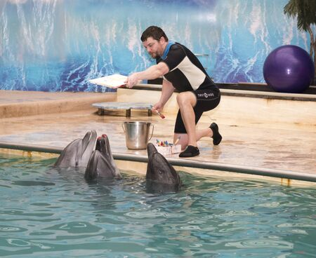 aciculum: Rostov-on-Don, Russia- February 1, 2015: Dolphin -Mom is preparing to make a print of lips in the picture under the guidance of the trainer in the Rostov dolphinarium, dolphins - sons are waiting Editorial
