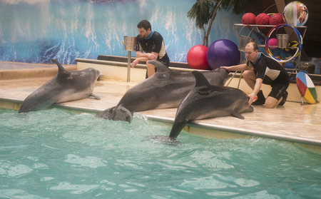 dolphinarium: Rostov-on-Don, Russia- February 1, 2015: Trainers talk with dolphins - mother and two sons in the Rostov dolphinarium