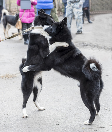Laika friendly embrace
