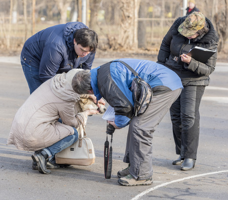 demonstrated: Rostov-on-Don,Rostov region,Russia- December 26; 2015: The owners of dogs demonstrated at the exhibition dog Editorial